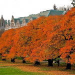 UW quad in the fall