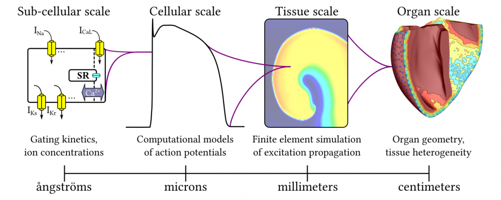Outline of computational and mathematical framework for multi-scale simulations of cardiac electrophysiology that will be used for projects conducted in the Boyle Lab.